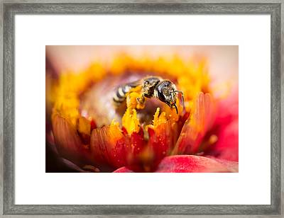Framed Print featuring the photograph Pollination by Priya Ghose