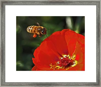 Pollination Framed Print by Rona Black