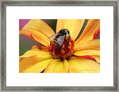 Pollinator  Framed Print by Melisa Meyers
