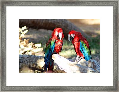 Polly And Pauly Framed Print by Dick Botkin