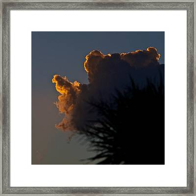 Polly And The Silverback Framed Print by Tim Nichols
