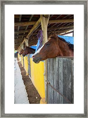 Polo Pony, Costa Careyes, Costalegre Framed Print by Douglas Peebles