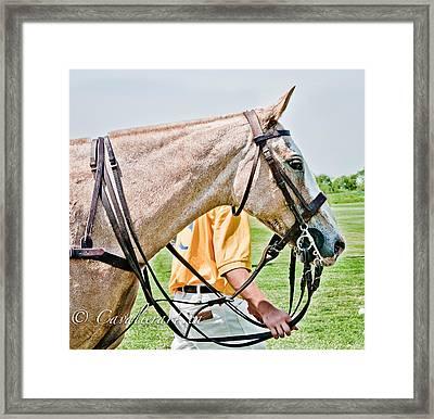 Polo Pony Framed Print by Sherri Cavalier