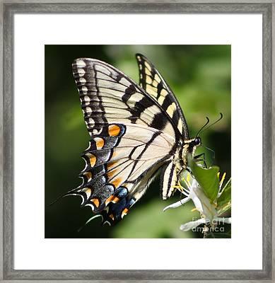 Polychromatic Beauty Framed Print