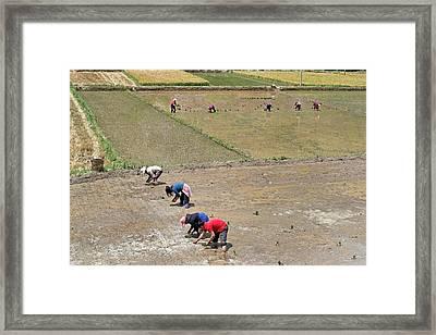 Polyculture Subsistence Farming Framed Print by Tony Camacho