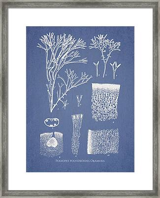 Polyopes Polyideoides Okamura Framed Print by Aged Pixel