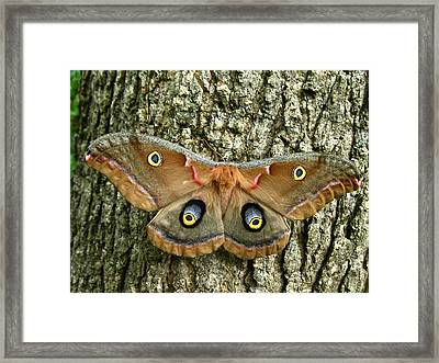 Framed Print featuring the photograph Polyphemus Moth by William Tanneberger
