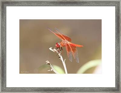 Pomegranate Eyes Framed Print
