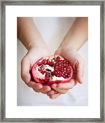 Pomegranate For You Framed Print by Ivy Ho