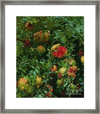 Pomegranates    Majorca Framed Print by John Singer Sargent