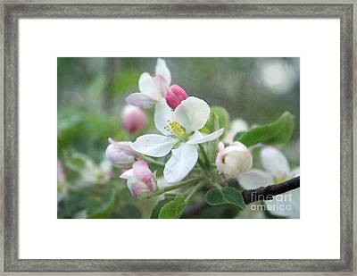 Pomme D Api 01 - S01bt01c Framed Print by Variance Collections