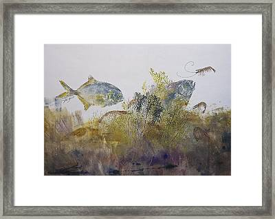 Pompano And Shrimp Framed Print by Nancy Gorr