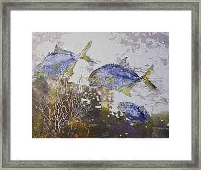 Pompano Trio Framed Print