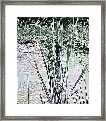 Pompesel Framed Print by Peter Norden