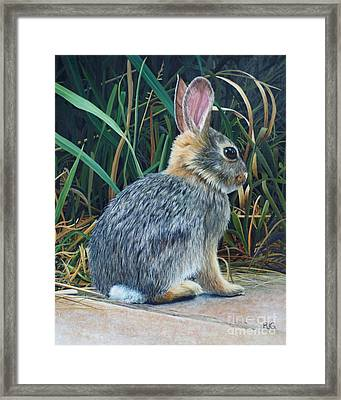 Pompey's Pillar Rabbit Framed Print