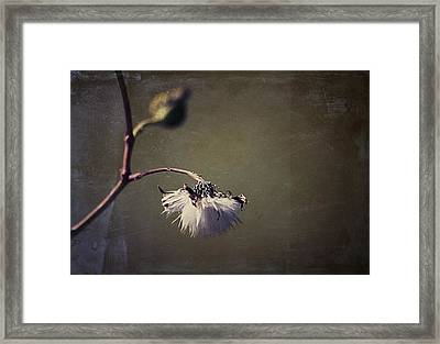 Pompom - 01bt01 Framed Print by Variance Collections