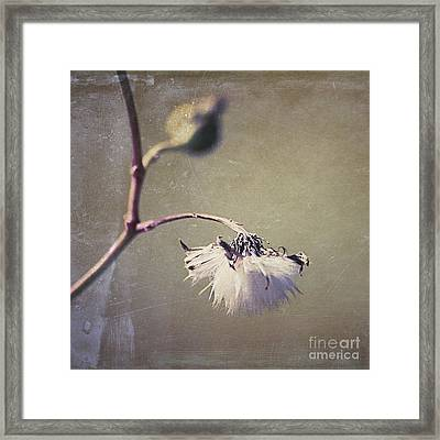 Pompom - 03dt01dsq Framed Print by Variance Collections