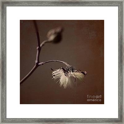Pompom - Br01t01c Framed Print by Variance Collections