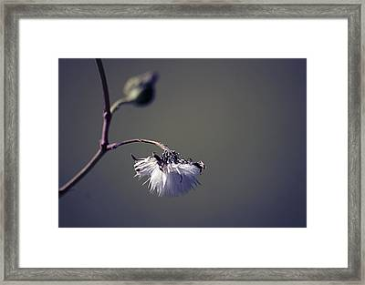 Pompon - 011 Framed Print by Variance Collections