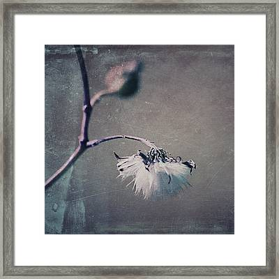 Pompon - T01ec02sq Framed Print by Variance Collections