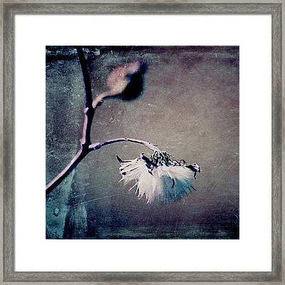 Pompon - T01ffc02sq Framed Print by Variance Collections