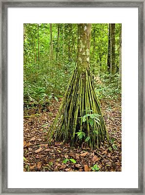 Pona Palm And Tapir Clay Lick, Manu Framed Print