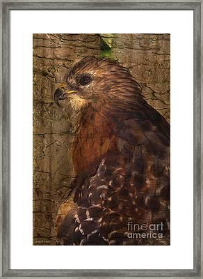 Ponce Inlet Hawk Framed Print by Deborah Benoit