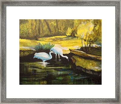 Pond 2 Framed Print