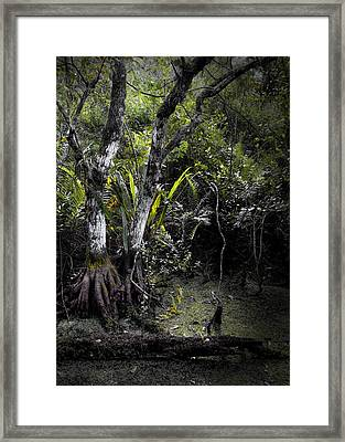 Pond Apple Framed Print by Rudy Umans