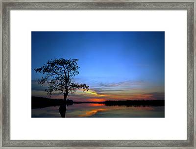 Pond Cypress. Lake Gentry Framed Print by Chris  Kusik
