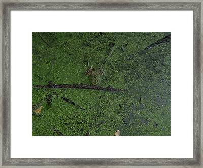 Framed Print featuring the photograph Pond Eyes by Robert Nickologianis