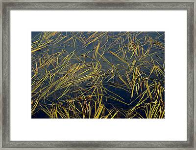 Pond Grass Framed Print by Marv Russell