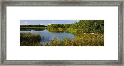 Pond In A Forest, Eco Pond, Flamingo Framed Print by Panoramic Images