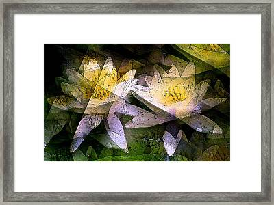 Pond Lily 24 Framed Print by Pamela Cooper