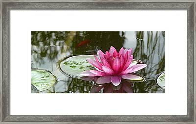 Pond Magic Framed Print by Evelyn Tambour