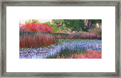 Pond Framed Print by Marilyn Diaz