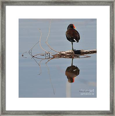 Framed Print featuring the photograph Pond Reflection by Debby Pueschel
