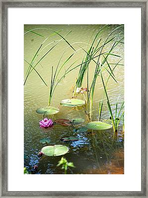 Pond  Reflections Framed Print by Elmer Baez