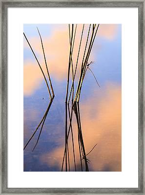 Pond Reflections Framed Print by Jonathan Gewirtz
