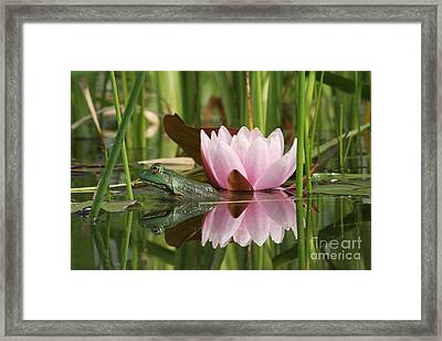 Pond Reflections Framed Print by Judy Whitton
