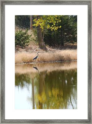 Pond Side Framed Print