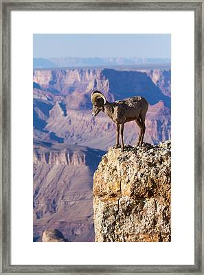 Pondering The Abyss  Framed Print by James Marvin Phelps