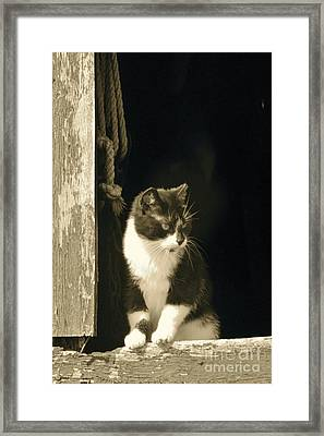 Pondering Framed Print by Tim Good