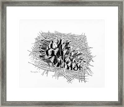 Ponderosa Pine Cone Framed Print