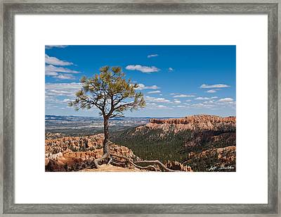 Framed Print featuring the photograph Ponderosa Pine Tree Clinging To Life On Canyon Rim by Jeff Goulden