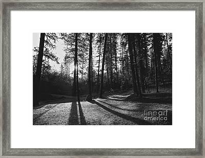 Ponderosa Shadows Framed Print