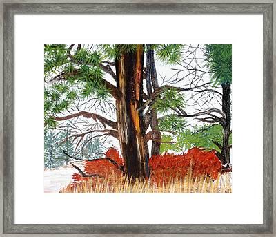 Ponderosa Winter Framed Print