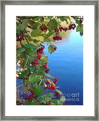 Pondview Framed Print