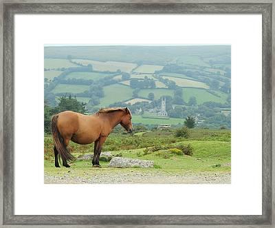 Pony Atop Hill Framed Print by Jf Halbrooks