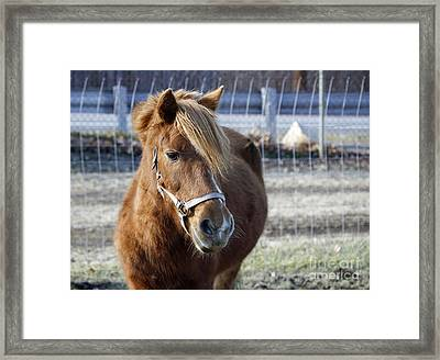 Pony Framed Print by Denise Pohl